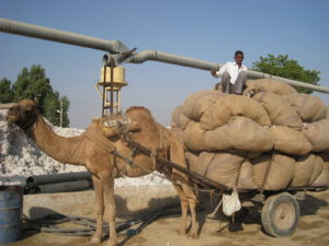 インド写真4